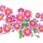 flowers-276003_960_720
