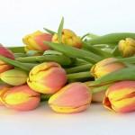 tulips-2101909_960_720